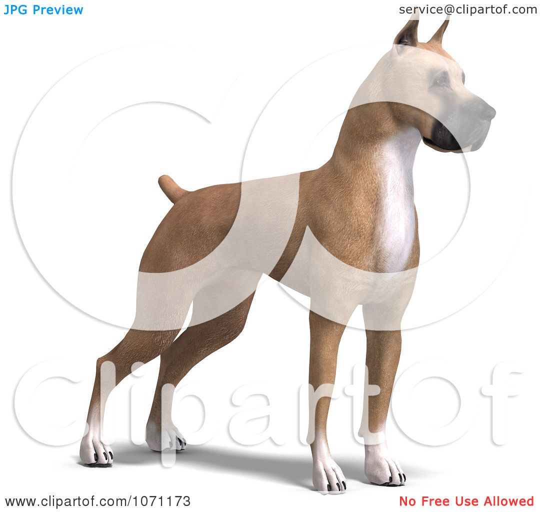 Clipart 3d Fawn Great Dane Dog Standing - Royalty Free CGI ...