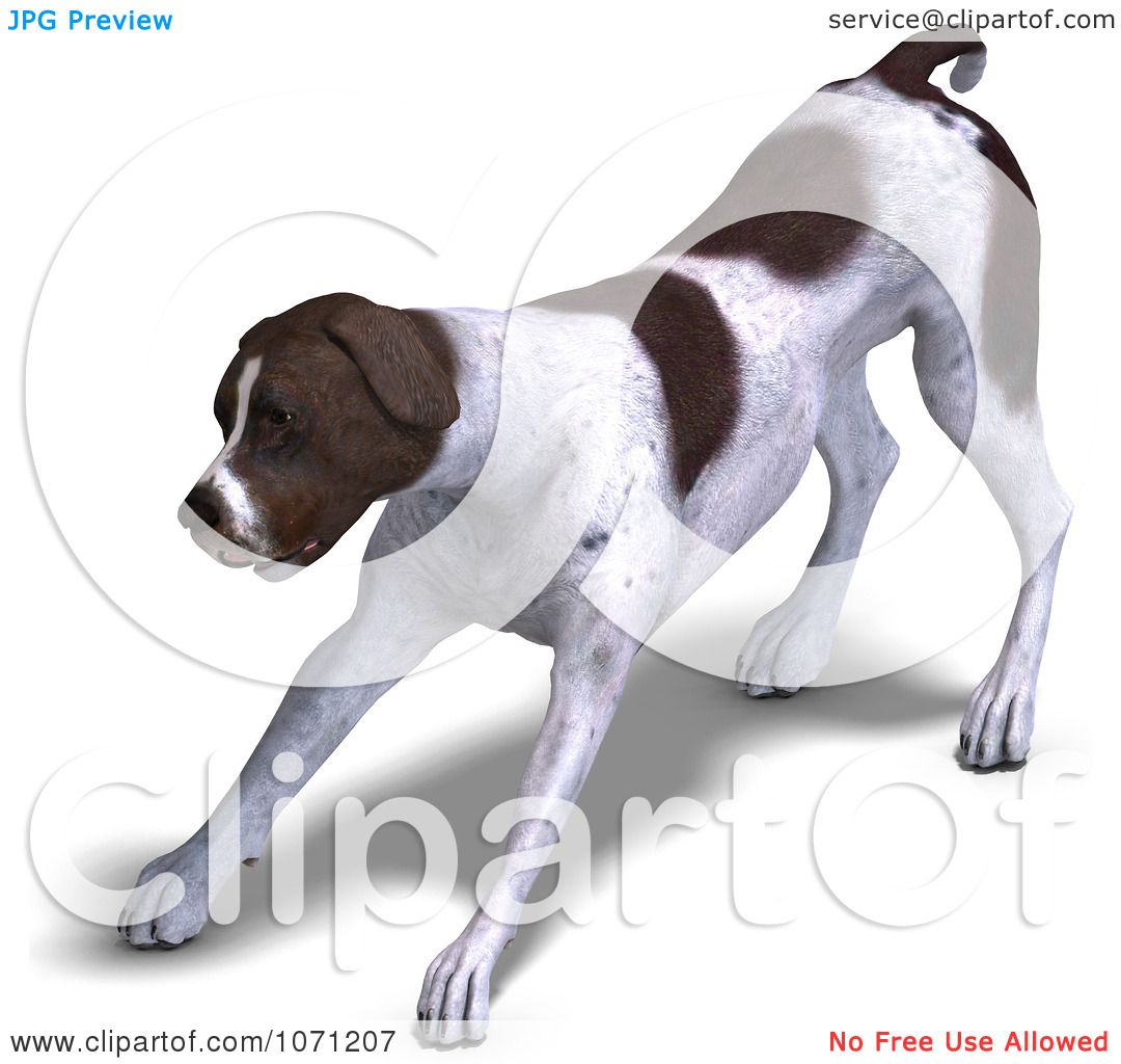 Clipart 3d German Shorthaired Pointer Dog Stretching - Royalty ...