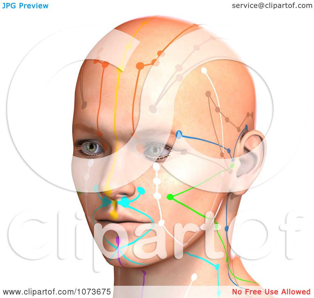 Clipart 3d Male Acupressure Chart Head 7 - Royalty Free ...