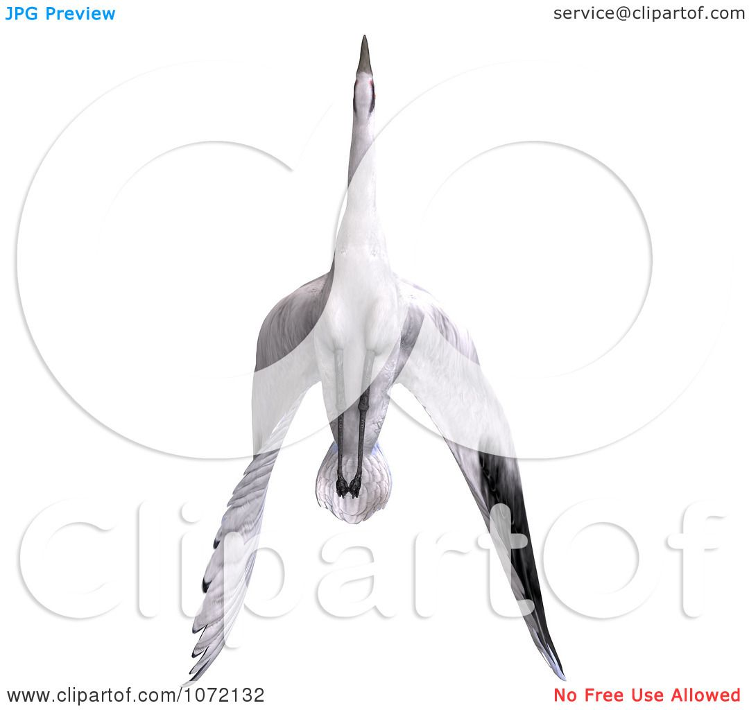 Free Bird Clipart Black And White Clipart 3d White Crane Bird