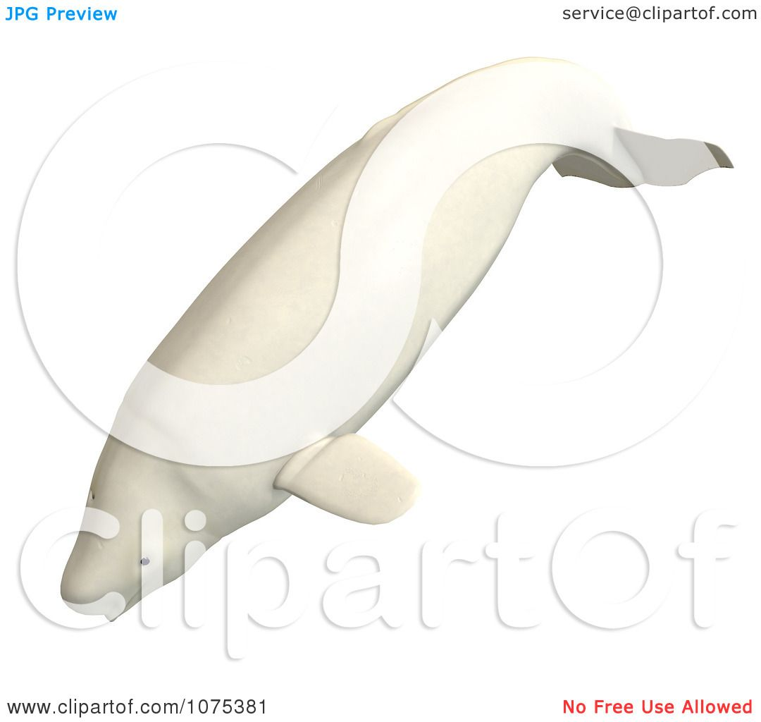 clipart 3d white male beluga whale 1 royalty free cgi