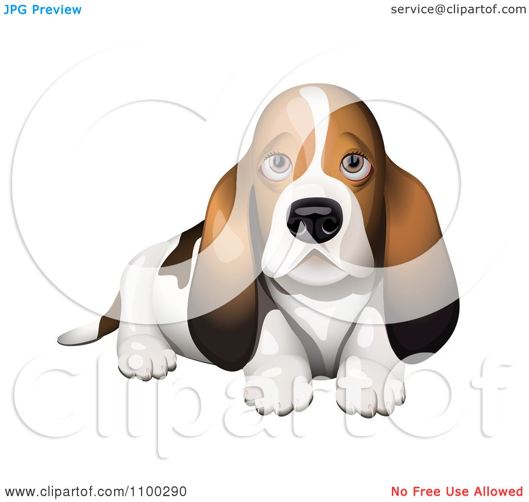Clipart Basset Hound Puppy - Royalty Free Vector Illustration by ...
