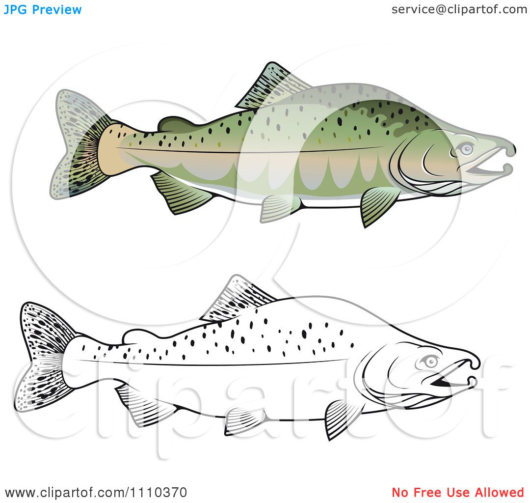 Free Coloring Pages Of Life Cycle Of A Salmon