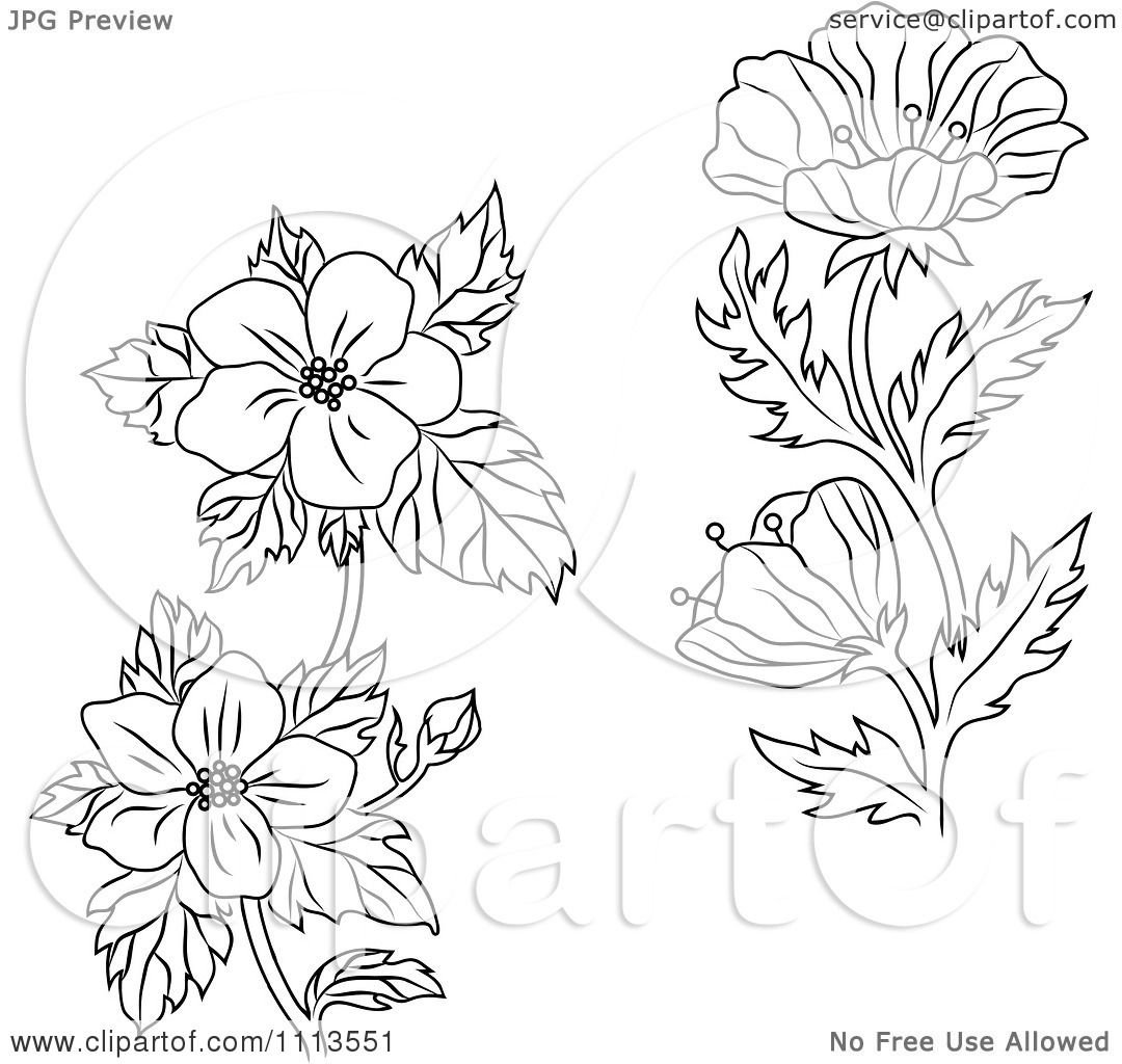 Free Dogwood Tree Coloring Pages