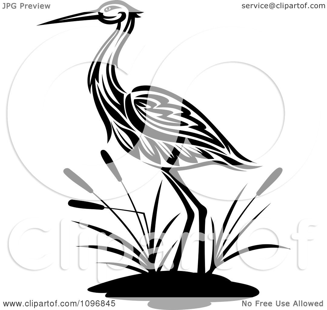 Clipart Black And White Crane Wading By Cattails Royalty