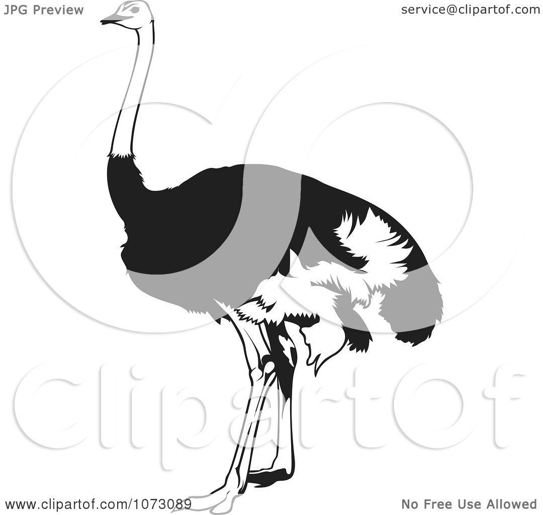 Clipart Black And White Emu Bird