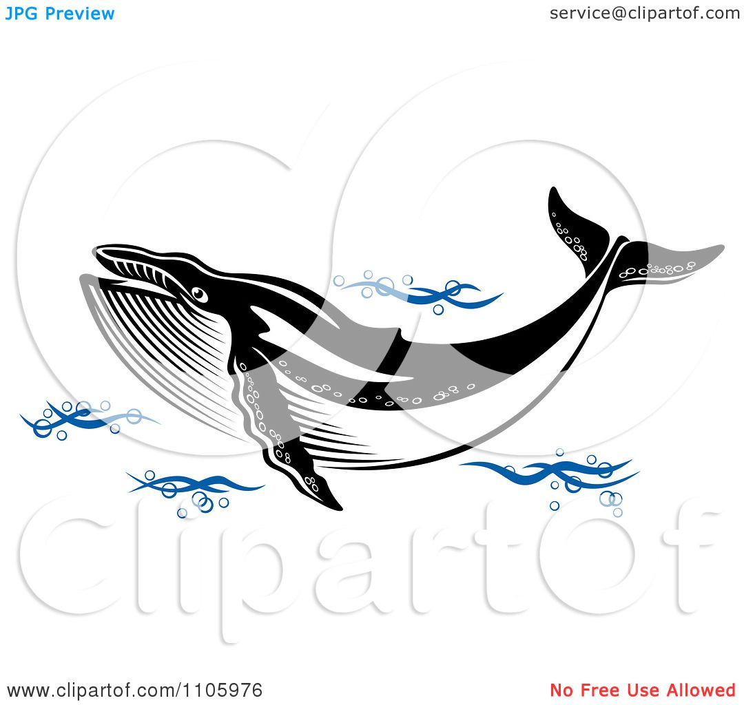 Blue whale clipart black and white