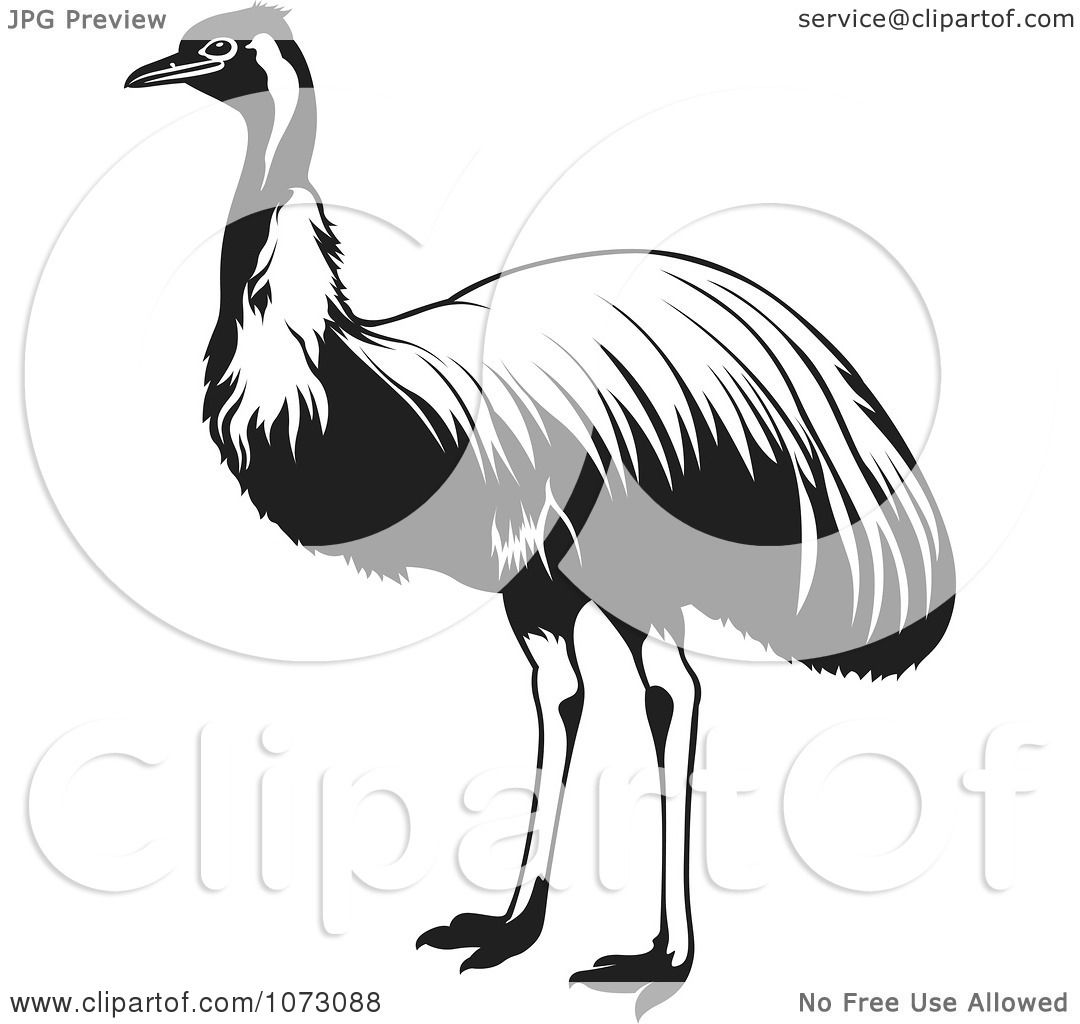 Clipart Black And White Ostrich Bird - Royalty Free Vector ...