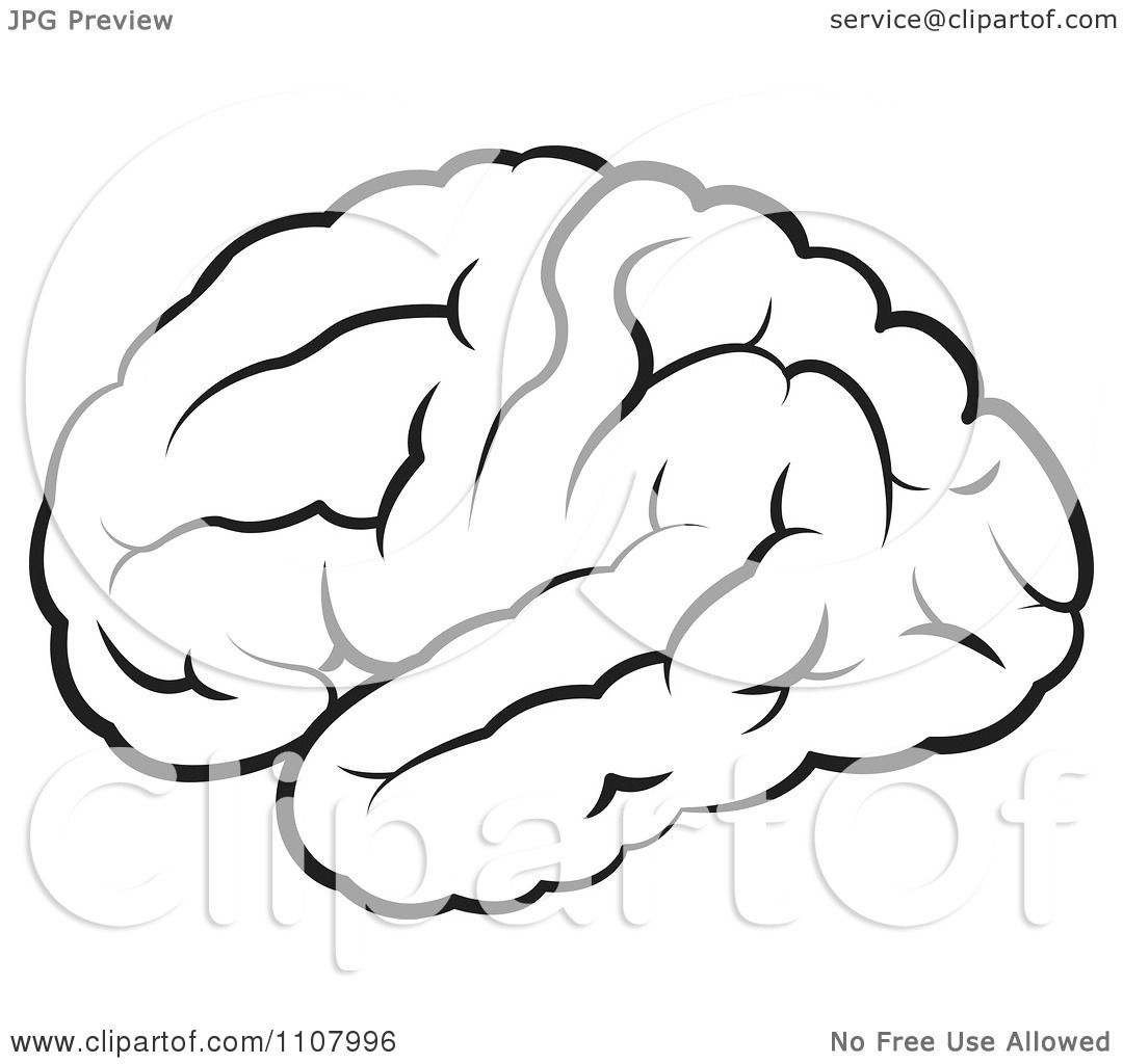 Clipart Black And White Outlined Human Brain - Royalty ...
