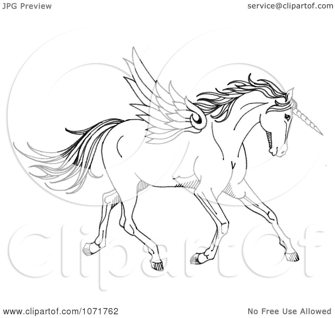 Black And White Sketched Fantasy Winged Unicorn Horse Winged Unicorn Coloring Pages