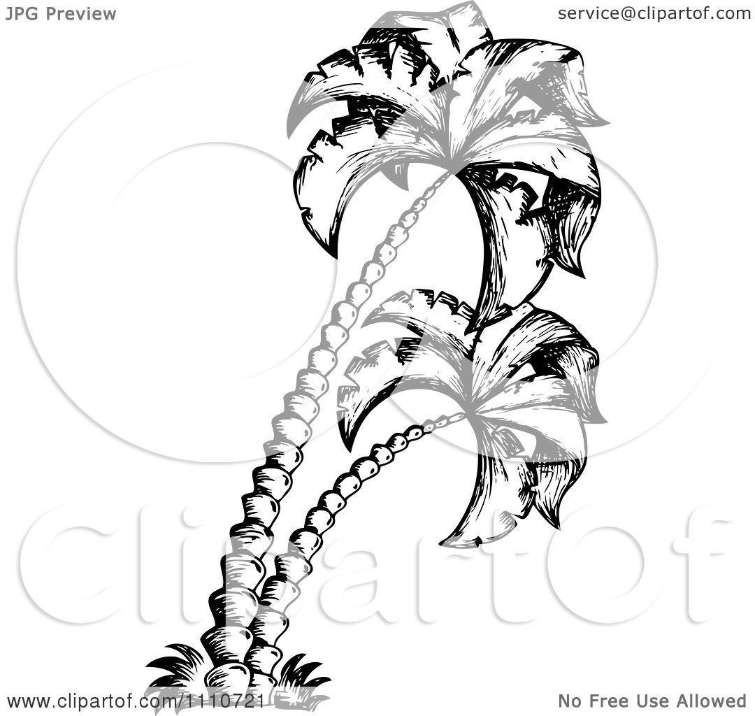 Palm Tree Clipart Black And White Clipart Black And White