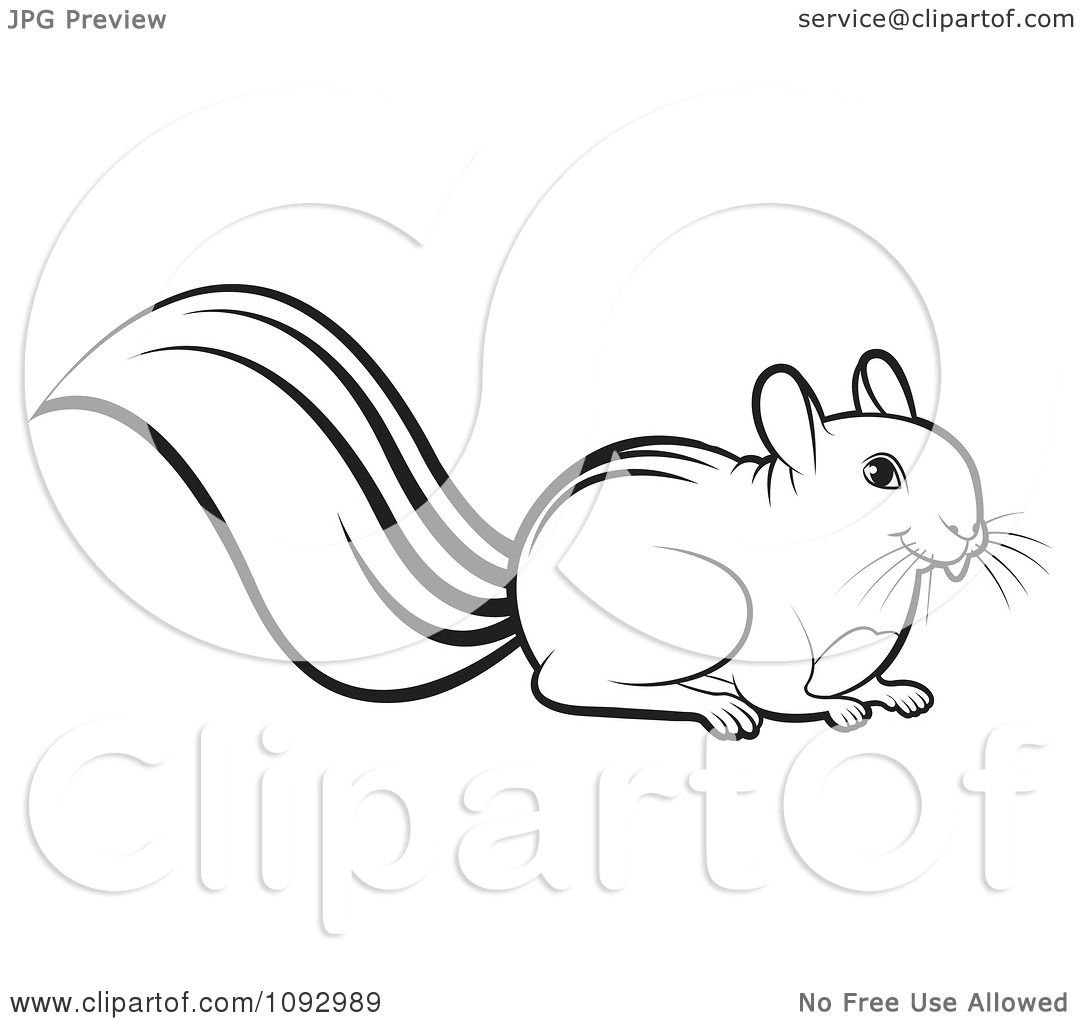 Squirrel images clipart black and white - photo#28