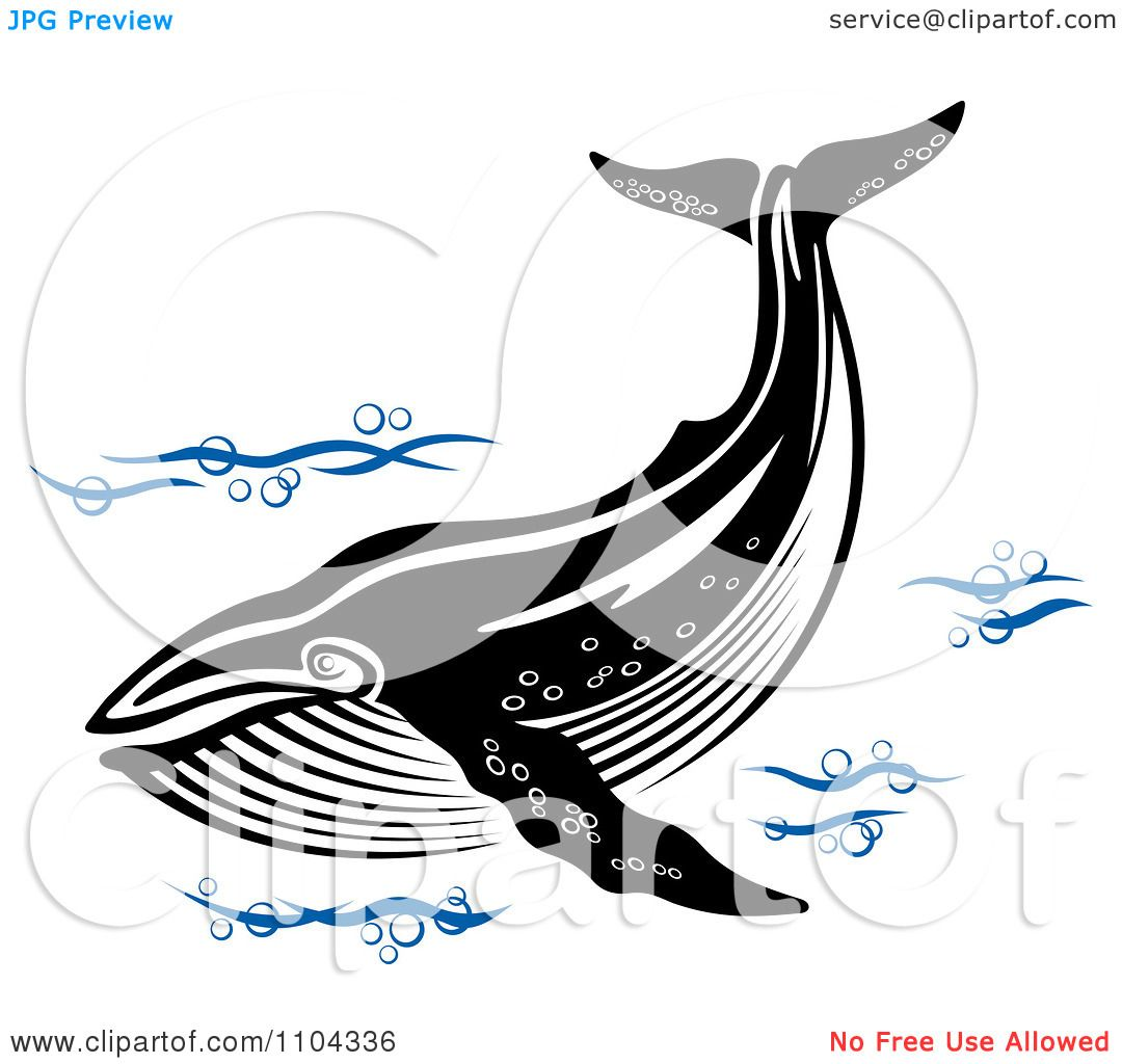 Whale clip art black and white