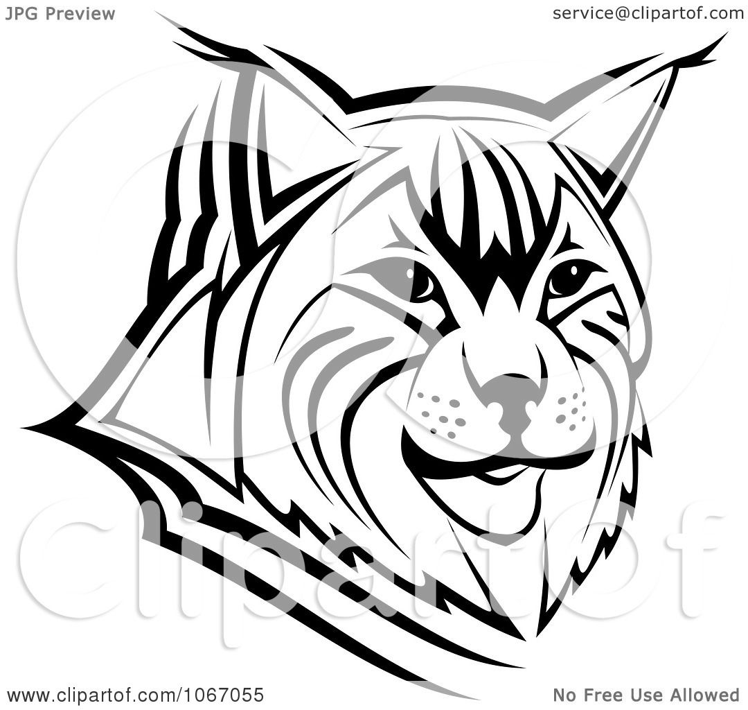 Clipart Bobcat Face Royalty Free Vector Illustration By