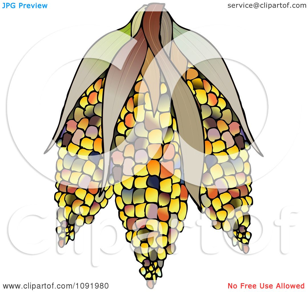 Indian Corn Drawing Clipart Colorful Indian Corn