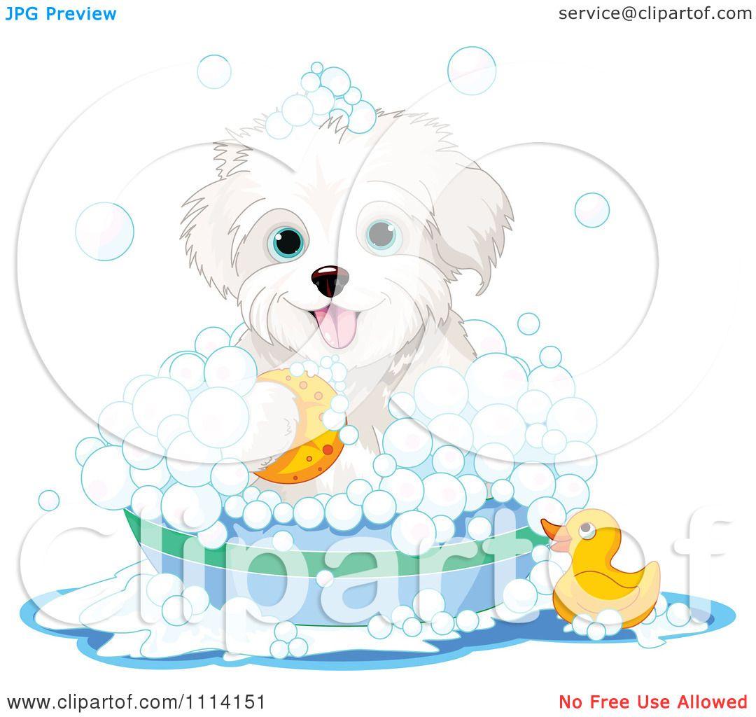 Clipart Cute Bichon Frise Maltese Puppy Bathing With A ...