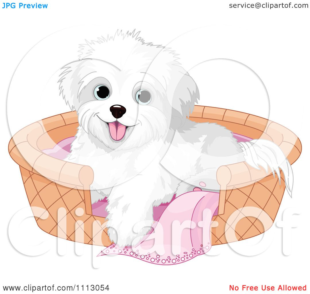 maltese dog clipart - photo #47