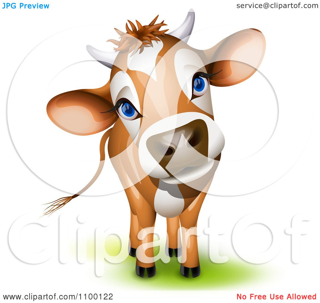 Clipart Cute Curious Jersey Cow