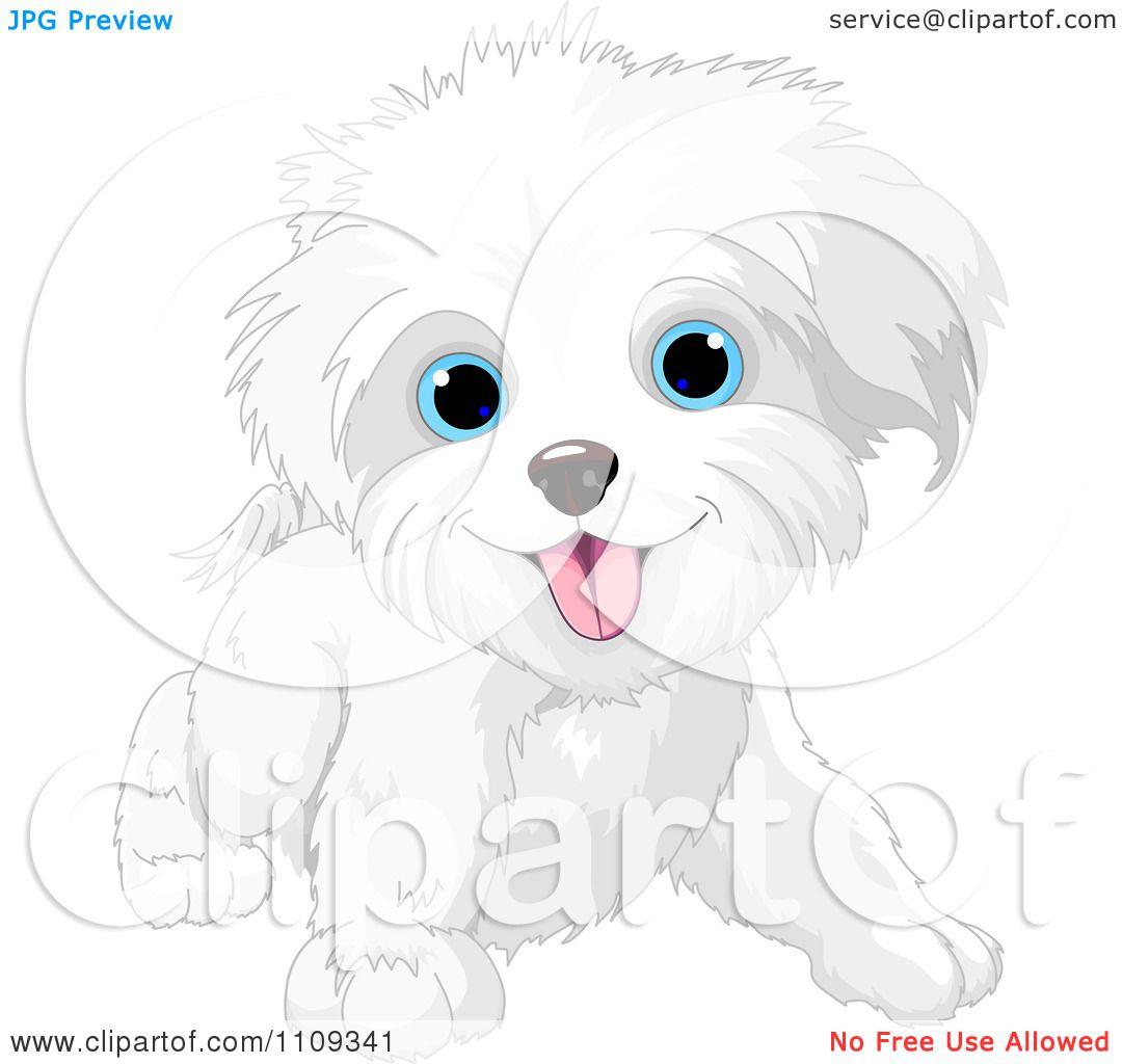 Clipart Cute Playful Bichon Frise Or Maltese Puppy Dog