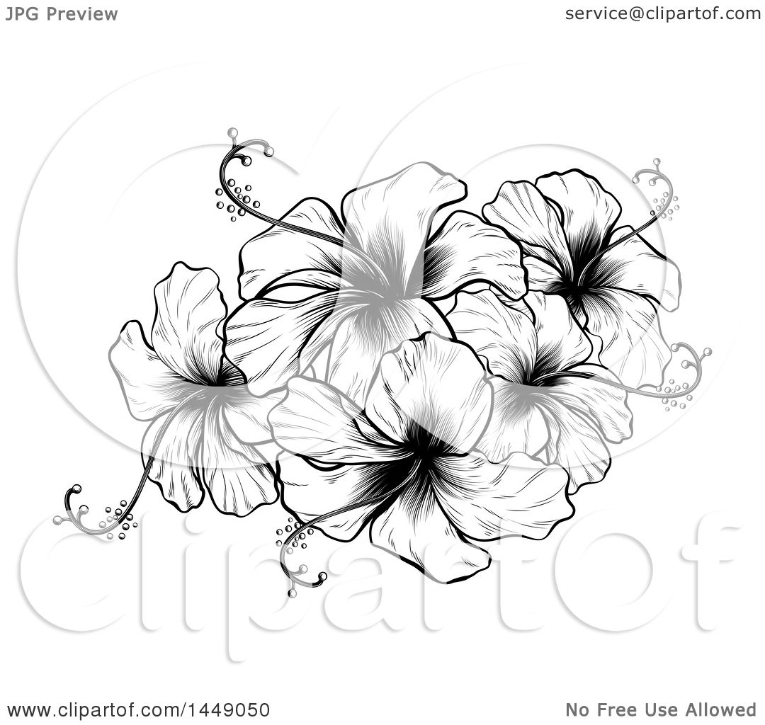 Clipart graphic of a vintage black and white engraved or woodcut clipart graphic of a vintage black and white engraved or woodcut hibiscus flower design royalty free vector illustration by atstockillustration izmirmasajfo