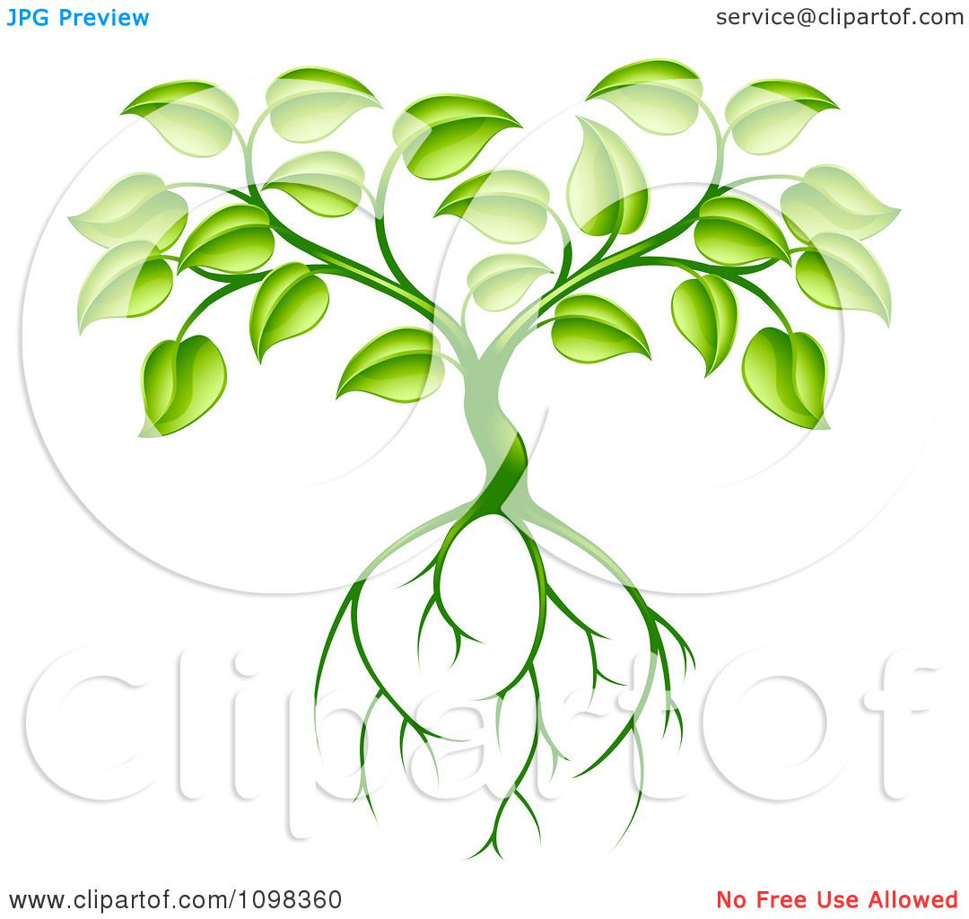 Clipart Green Plant With Leaves And Deep Roots Royalty