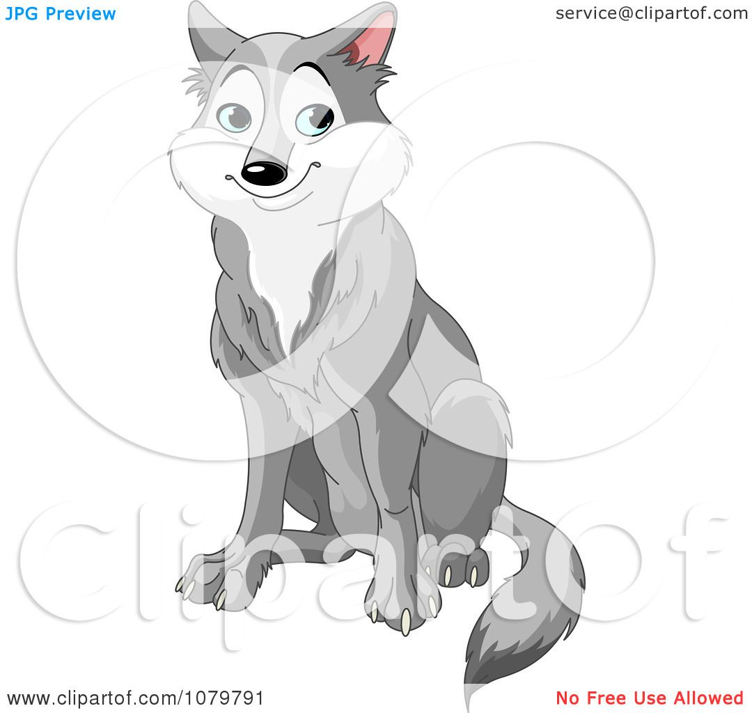 Sitting Wolf Drawings Handsome Gray Wolf Sitting