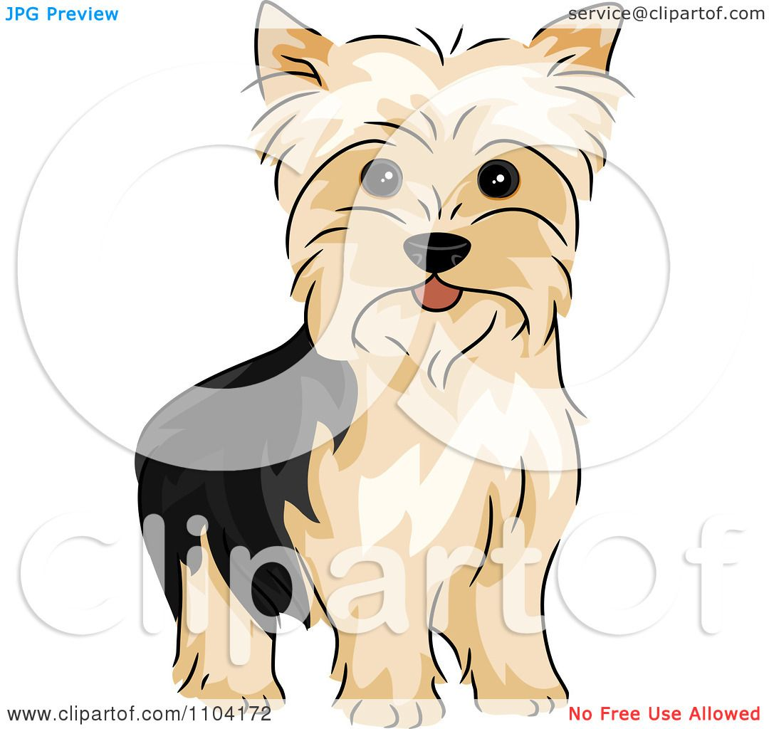 Clipart happy alert yorkshire terrier yorkie dog royalty - Dessiner un yorkshire ...