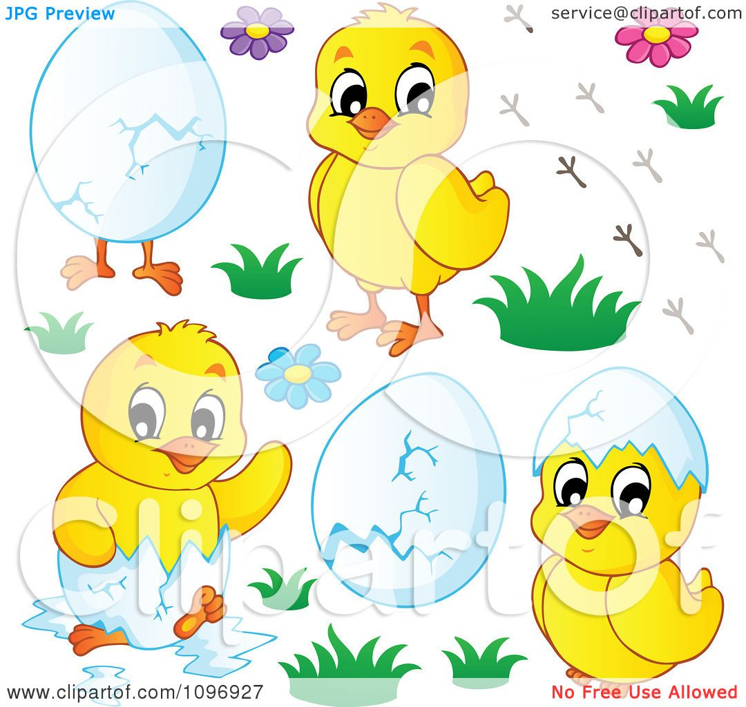 Clipart Hatching Spring Chicks Flowers And Eggs Royalty