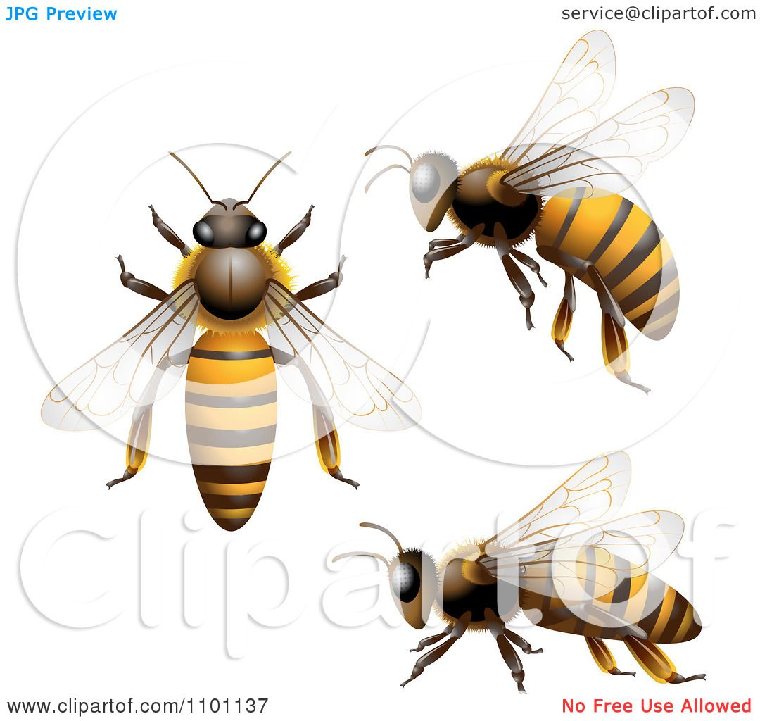 Clipart Honey Bees Shown From Above The Side And In Flight