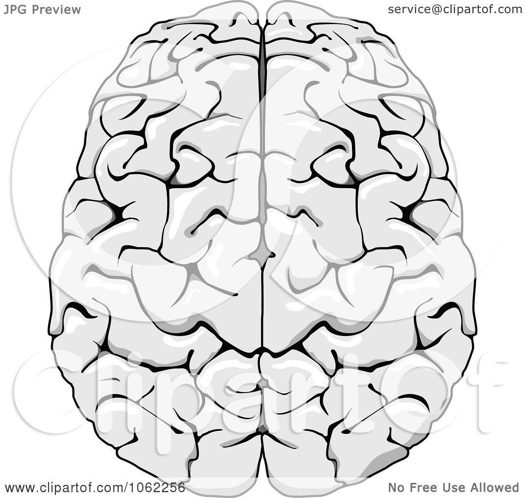 Blank brain diagram to label blank brain lobes diagram blank brain diagram pooptronica