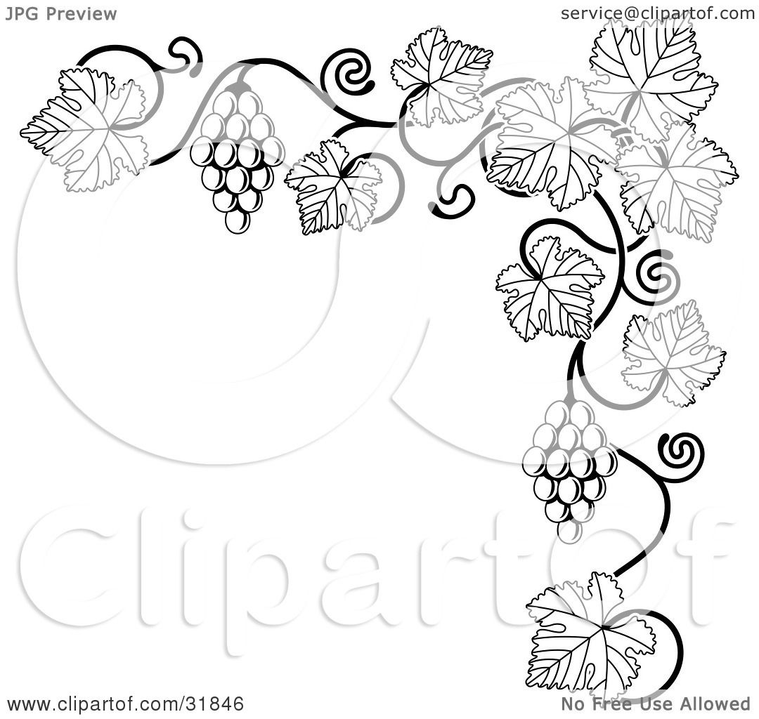 Clipart Illustration of a Black And White Grape Vine With Bunches ... for Drawing Grape Vines  156eri