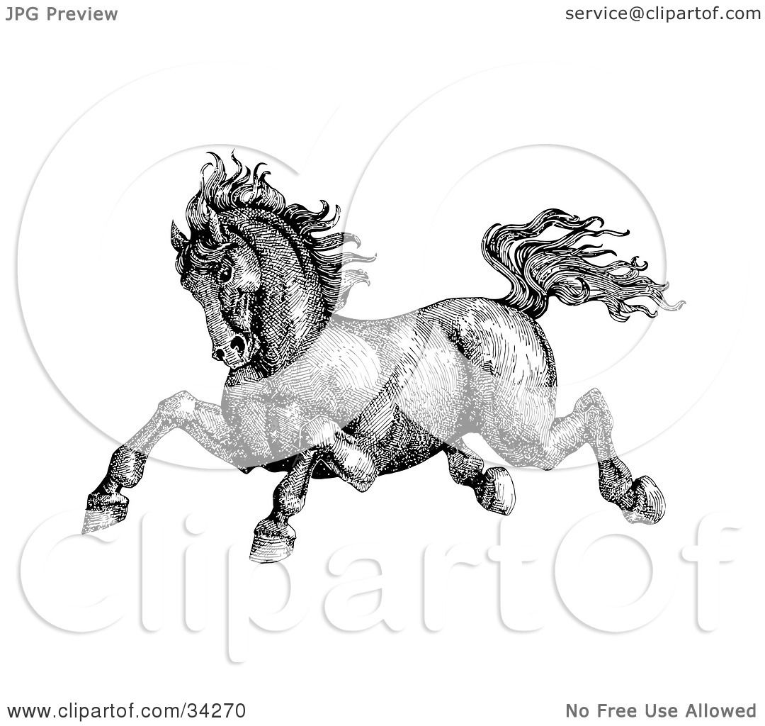 Clipart Illustration Of A Black And White Pen Ink Drawing Muscular Victorian Horse Running To The Left By C Charley Franzwa