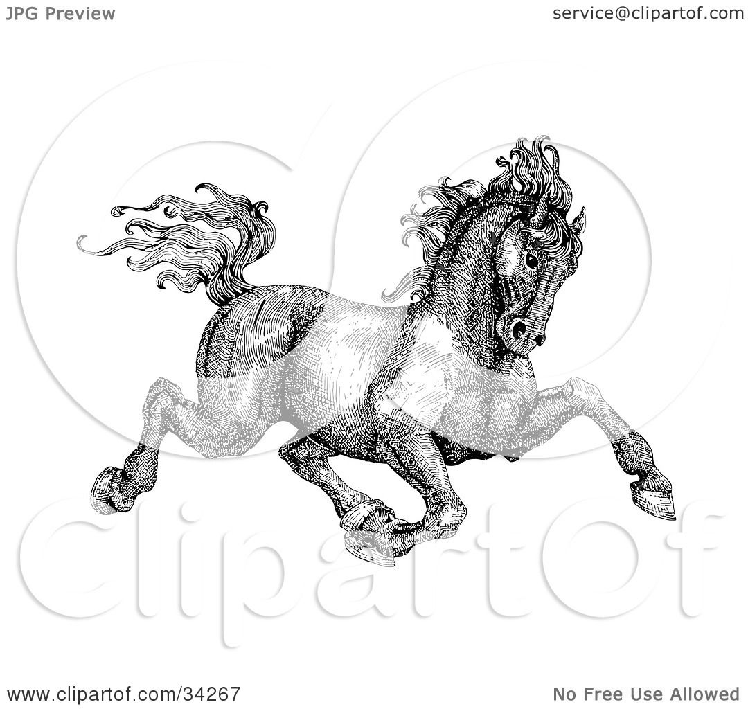 Clipart Illustration Of A Black And White Pen And Ink Drawing Of A Muscular  Victorian Horse Howtodraw