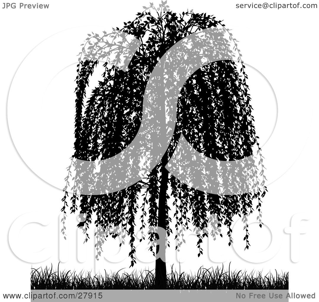 Weeping Willow Tree Black And White Tattoo Clipart Illustr...