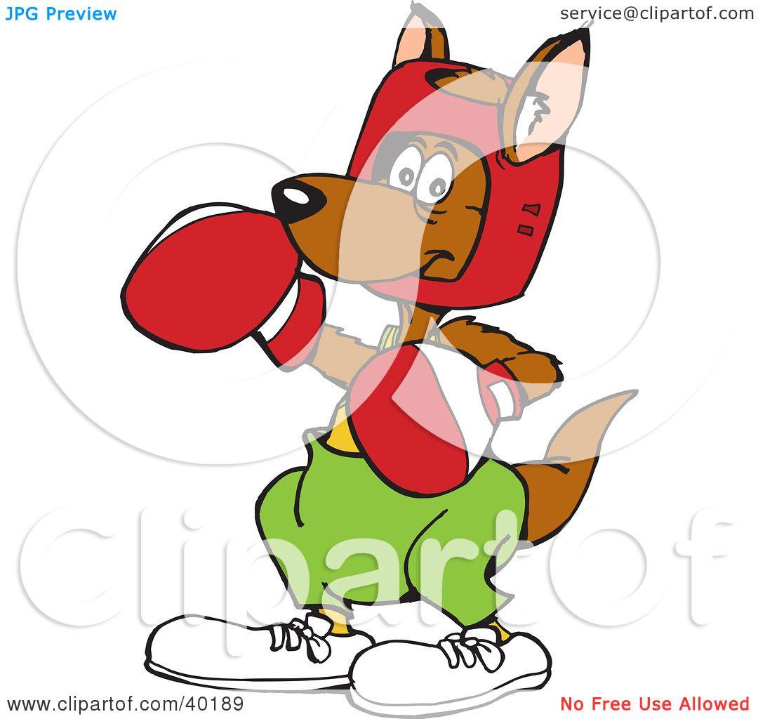 Real boxing kangaroo funny