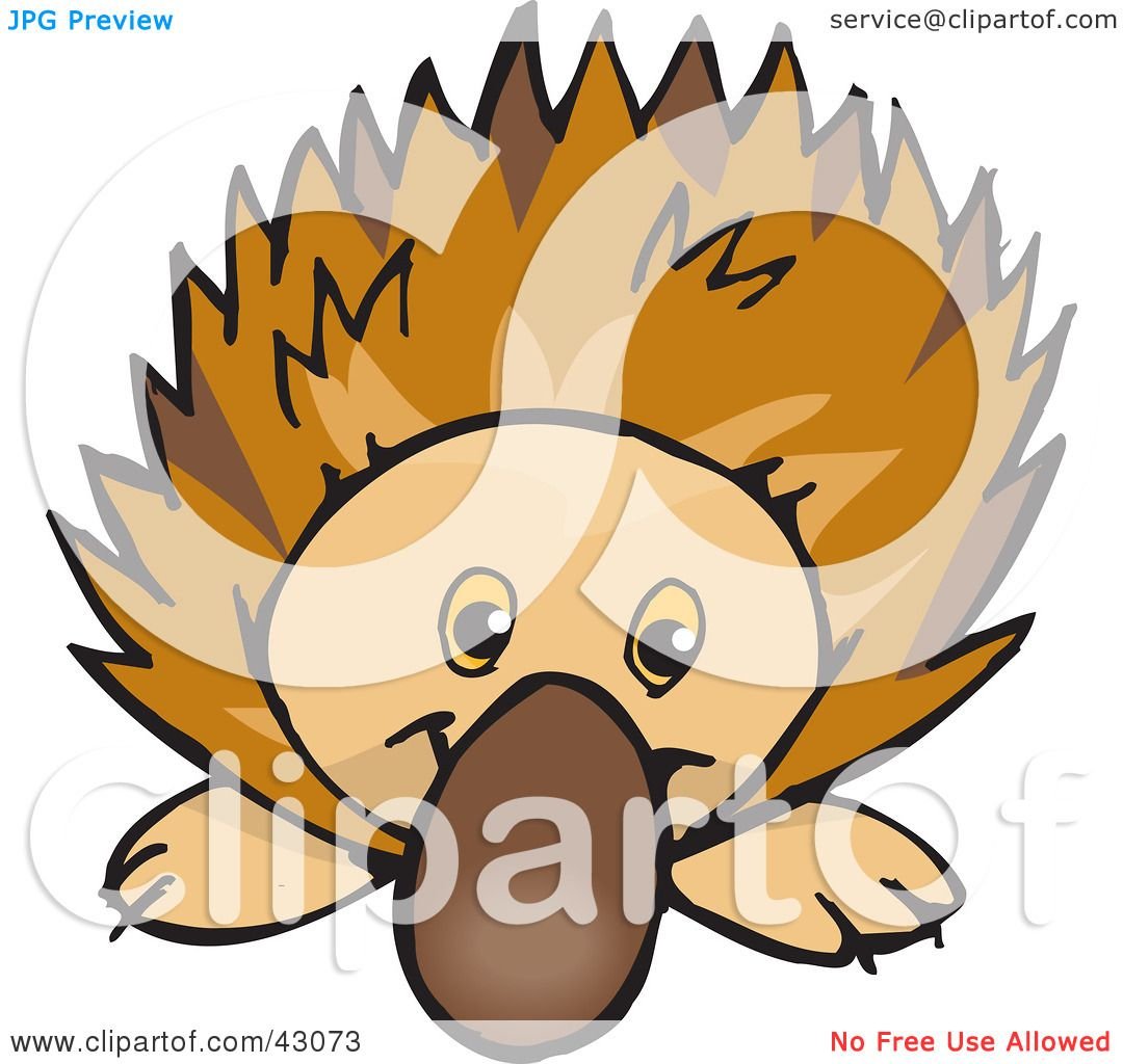 Cute Anteater Drawing Clipart illustration of a cute