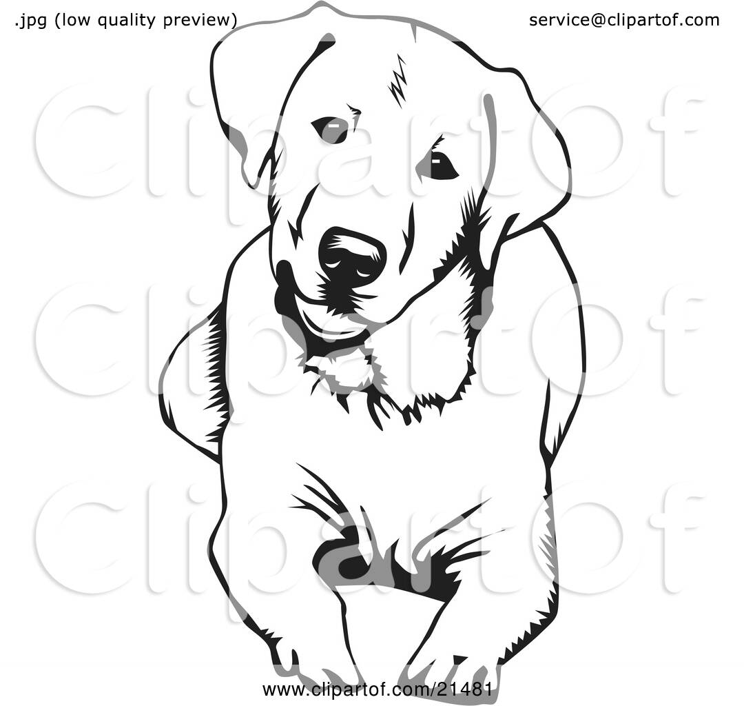 clipart illustration of a cute and curious labrador retriever dog lying down and tilting his. Black Bedroom Furniture Sets. Home Design Ideas