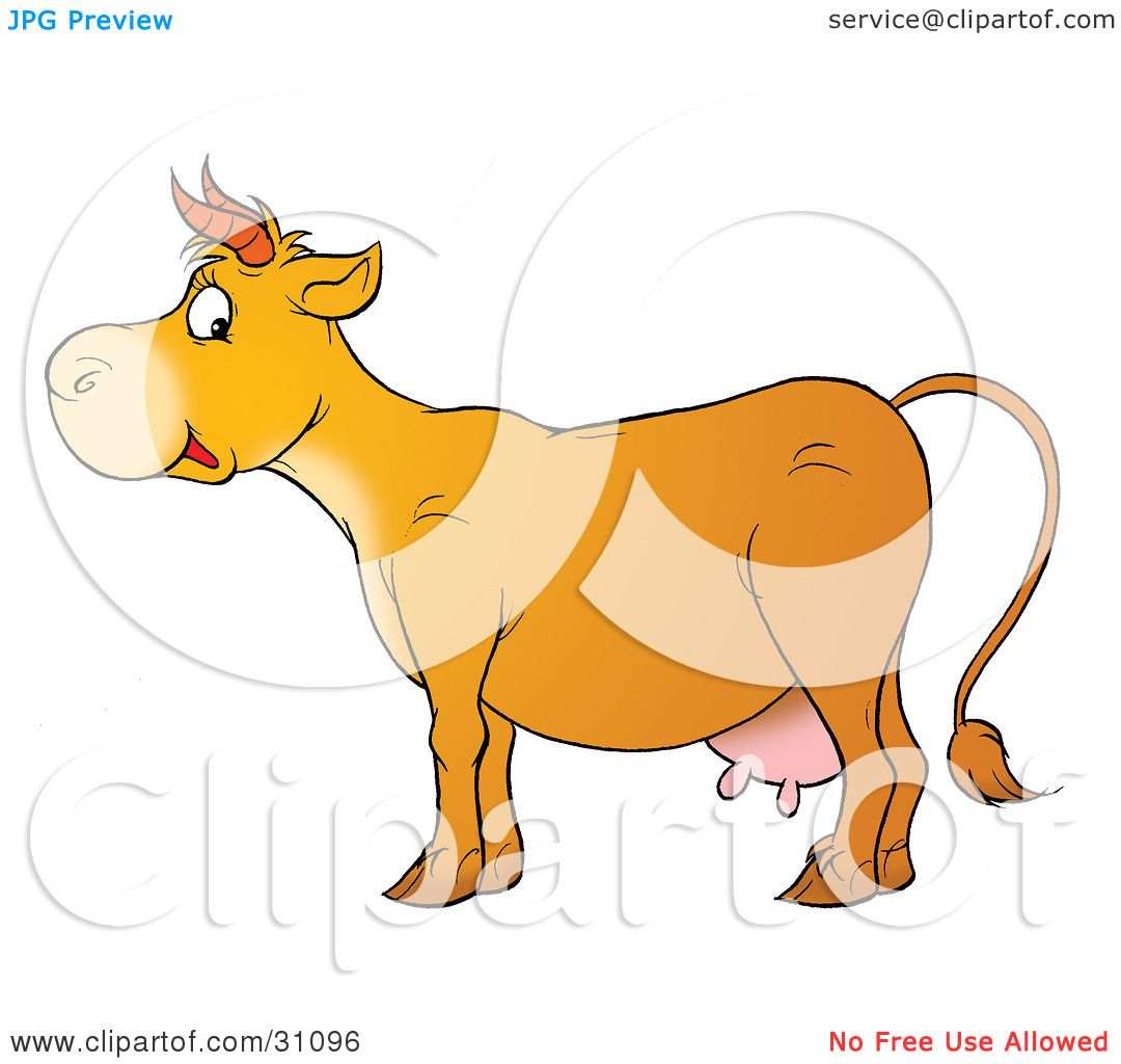 Cow Udder Clipart Cow With Udders Clipart
