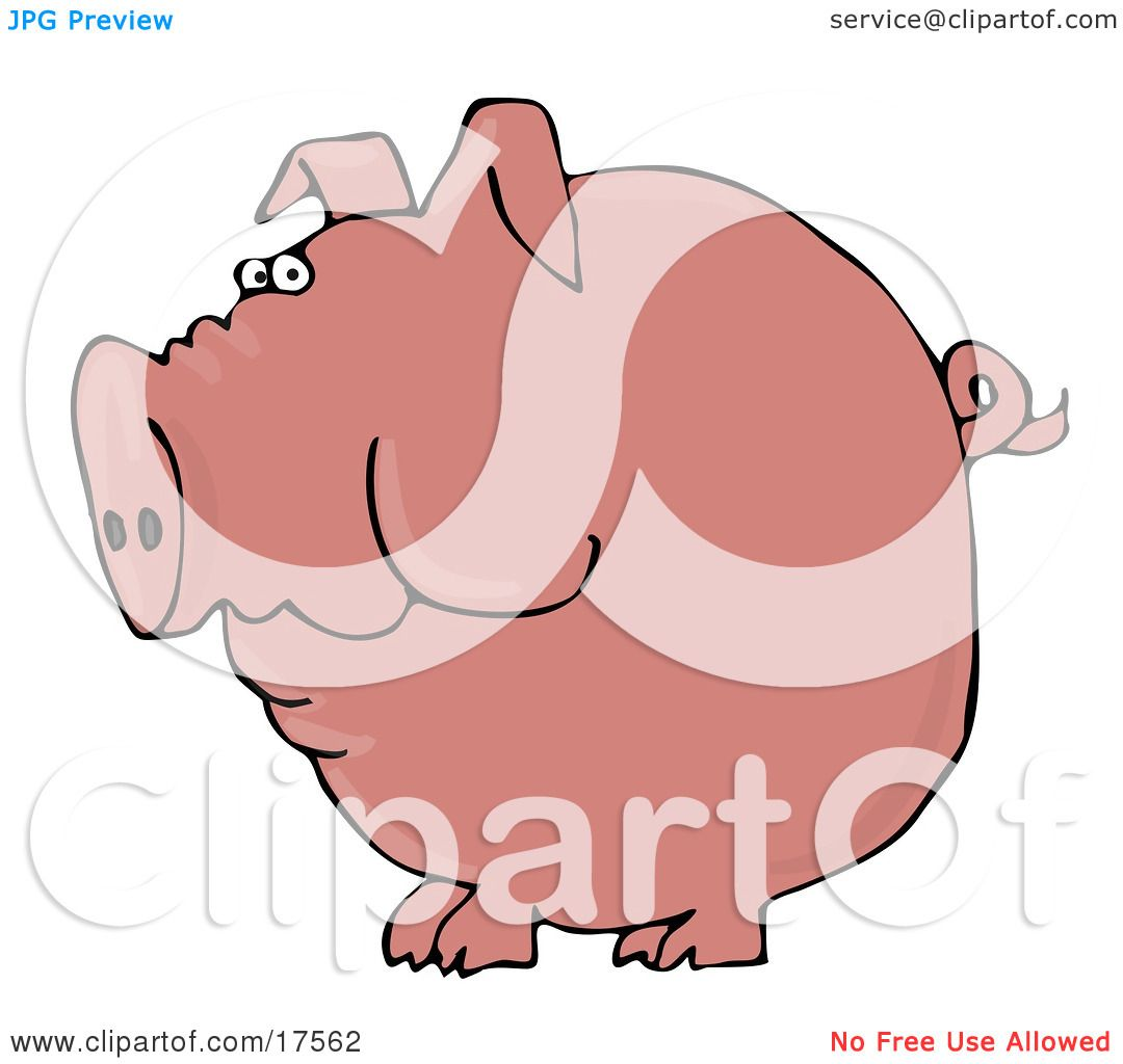 Clipart Illustration of a Fat Pink Pig With A Curly Tail Holding ...