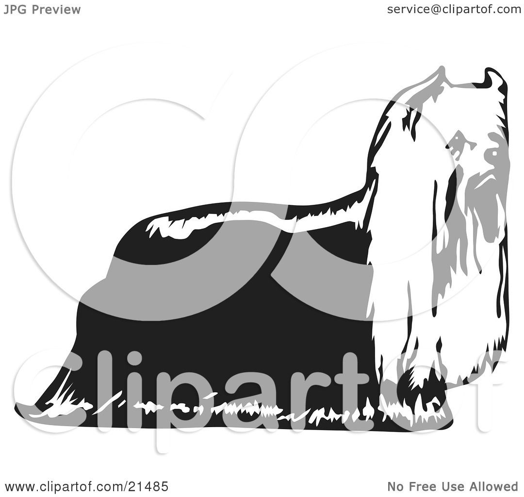 Clipart Illustration Of A Hairy Yorkie Yorkshire Terrier