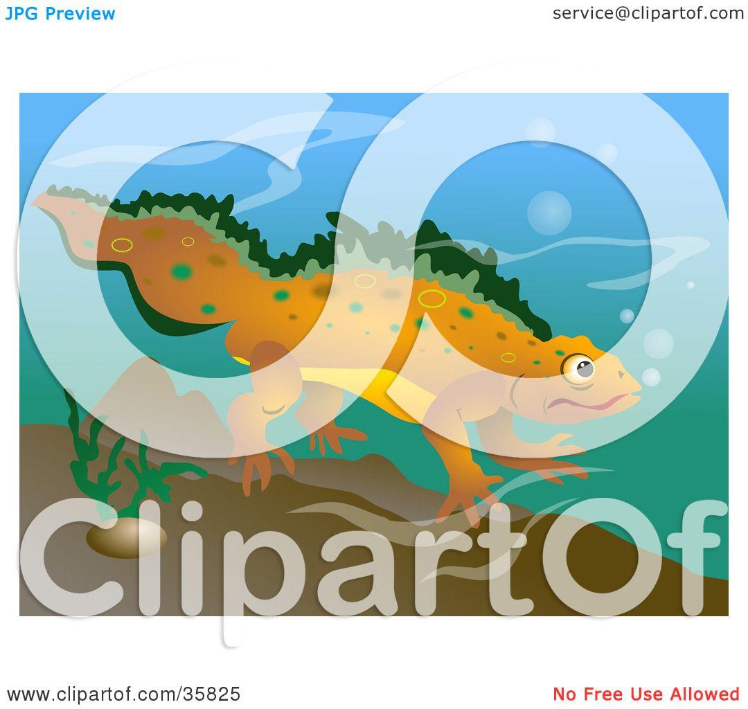 clipart newt - photo #49