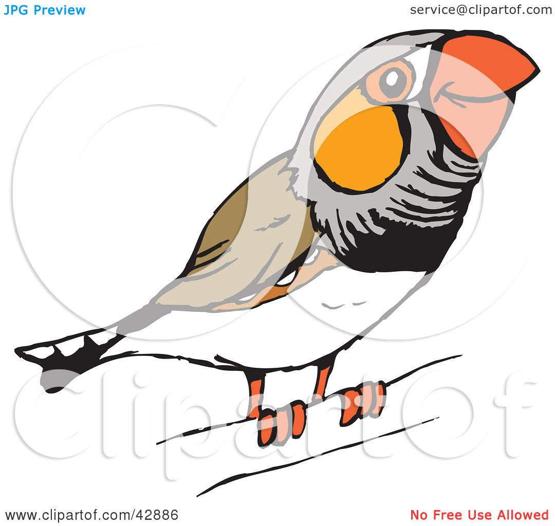 Clipart Illustration of a Happy Perched Zebra Finch ...
