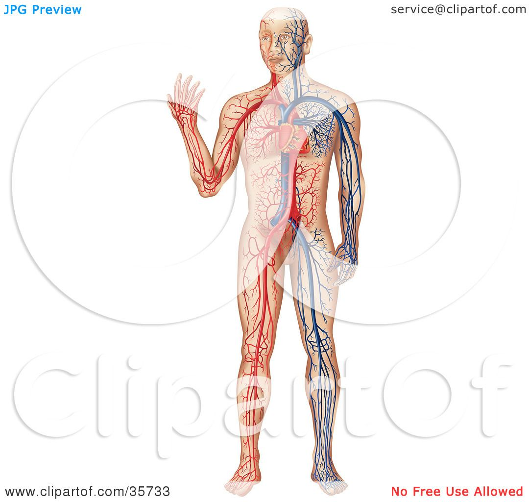 Clipart Illustration of a Heart Pumping Blue And Red Blood ...