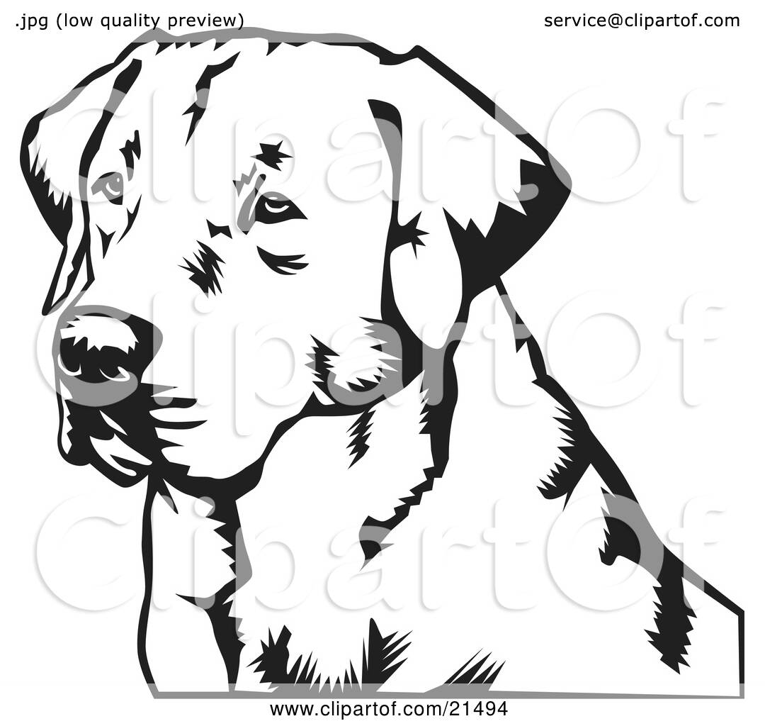 Clipart Illustration Of A Labrador Retriever Dogs Face Looking Off