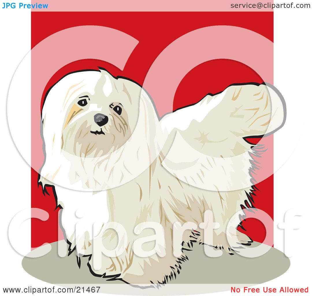 maltese dog clipart - photo #19