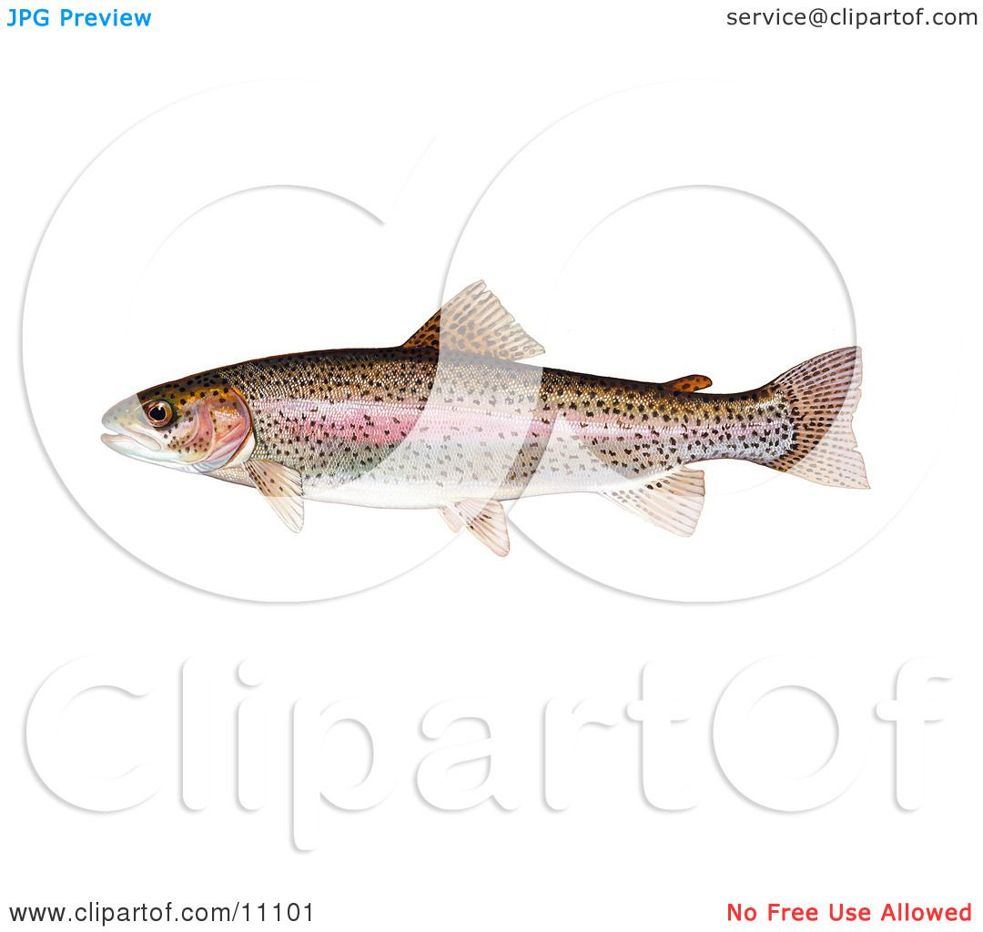 Watch more like Rainbow Trout Fish Clip Art