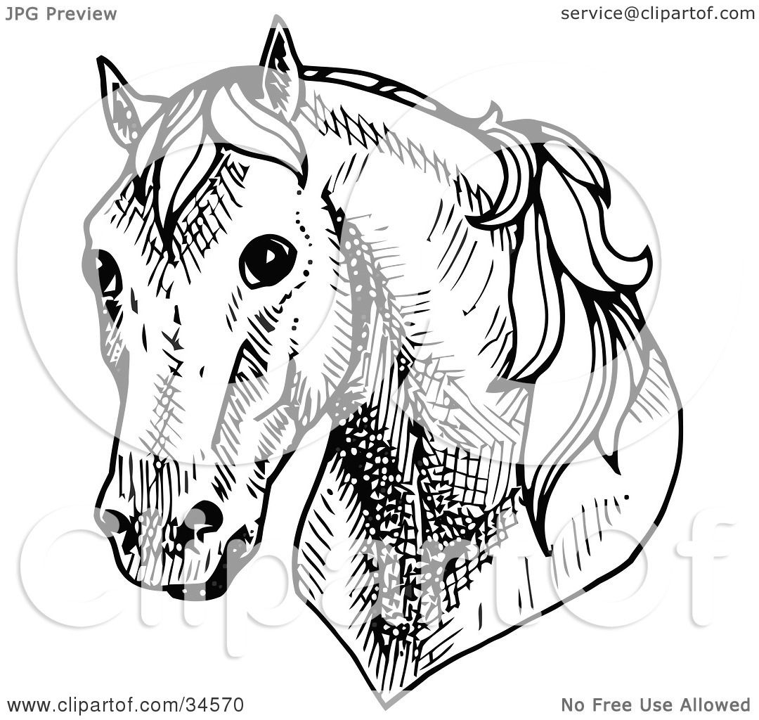 Clipart Illustration Of A Shy Horses Head Facing Front By C Charley Franzwa
