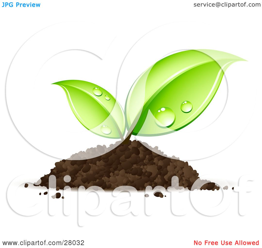 Clipart Illustration of a Sprouting Seedling Plant Emerging From A ...