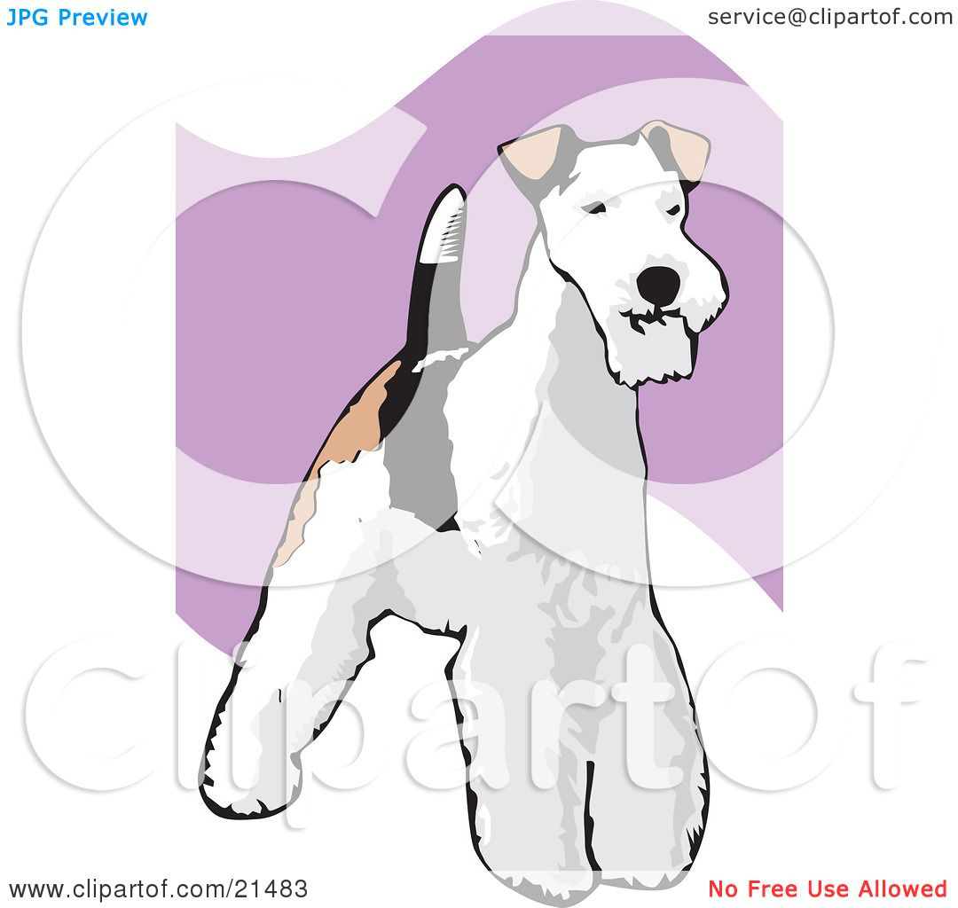 Clipart Illustration of a Standing And Alert Wire Fox Terrier Dog ...