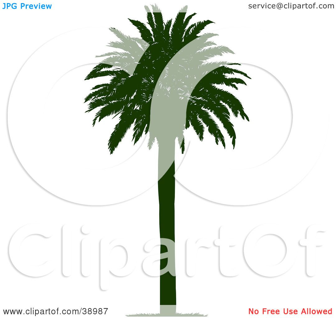 Clipart Illustration of a Straight And Tall Silhouetted Coconut Palm ...